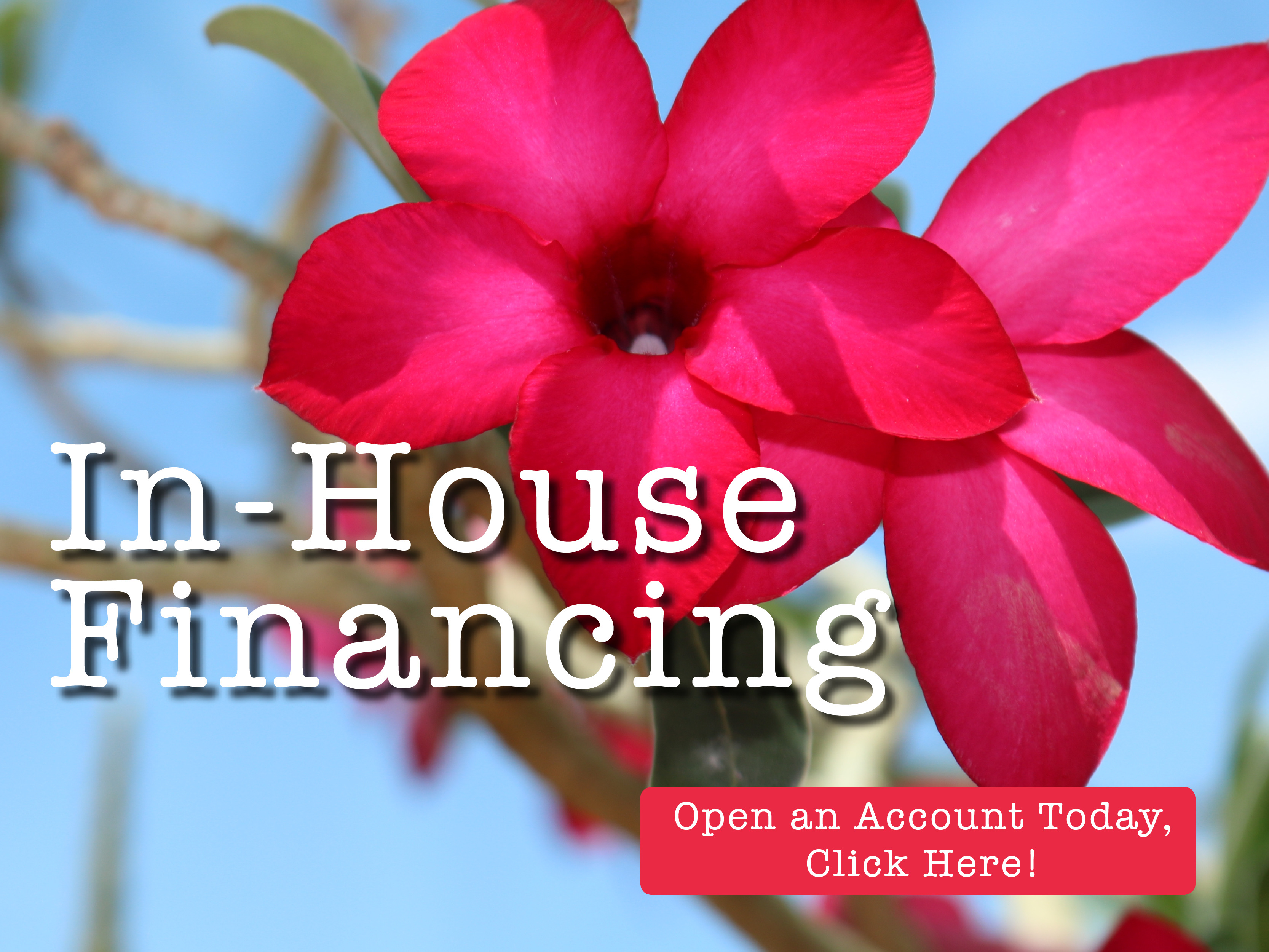 Plant World In-house financing